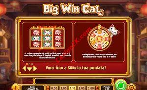 bonus Big Win Cat