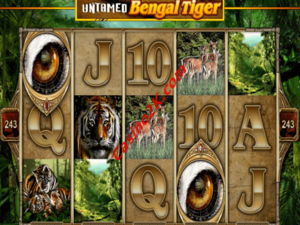 Untamed: Bengal Tiger